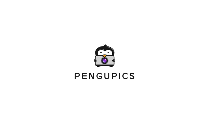 PenguPicsLogoDesign_Ancitis